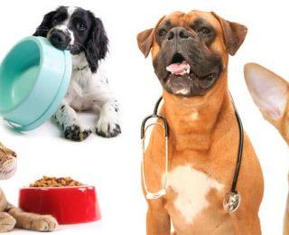 Reconnaître les symptômes d'un chien malade