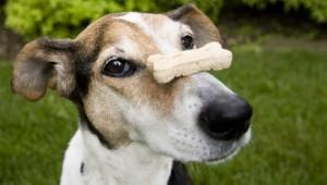 friandise pour chien