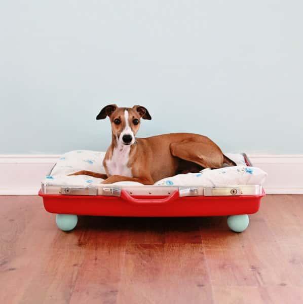 panier-chien-valise