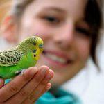 Quelle espèce d'oiseau choisir ?