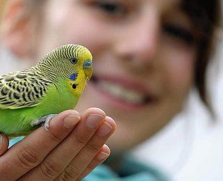 Premier oiseau : lequel choisir ?