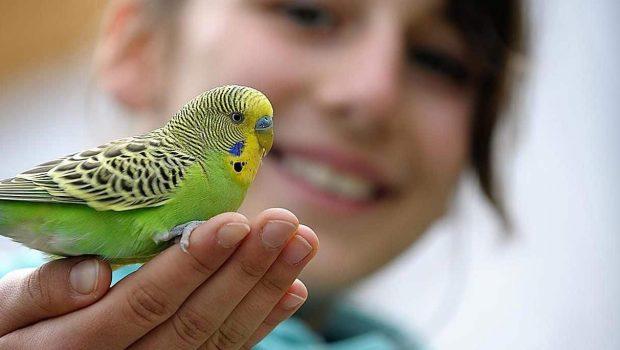 Premier oiseau exotique : quelle espèce choisir ?