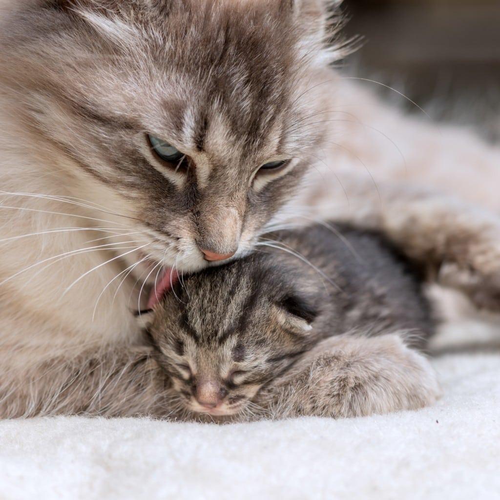 Chat Pisse Tapis Salle De Bain ~ produit pour que le chat ne fasse pas pipi maison design apsip com
