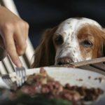 Sos mon chien réclame à table