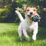 Idées de jouets pour son chien
