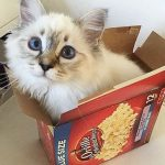 Pourquoi les chats aiment-ils se mettre dans des boîtes ?