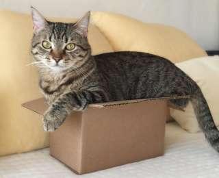 15 photos qui prouvent que les chats aiment les boîtes