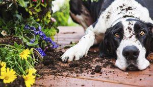 chien-betise-jardin-dannois