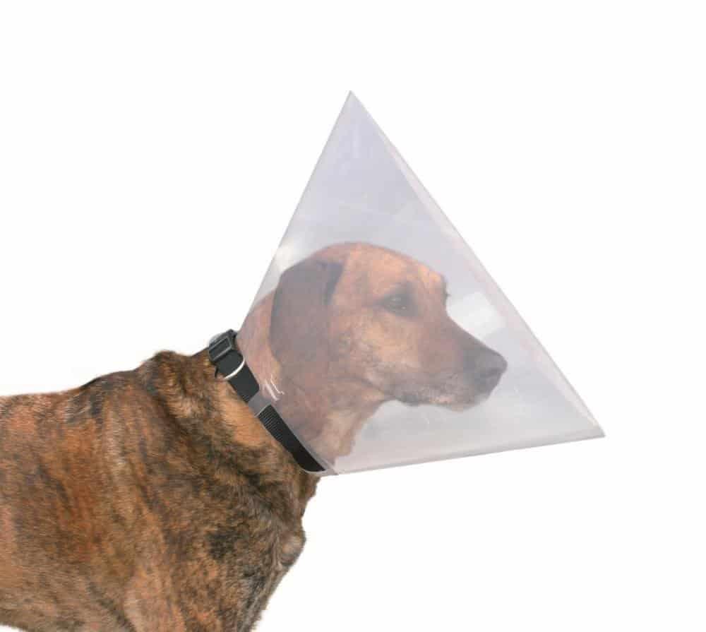 collier vétérinaire