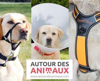 Colliers pour chien : lequel choisir ?