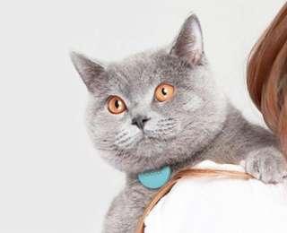 10 produits au poil pour ton chat #1