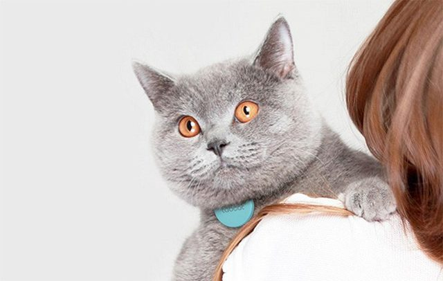 Tabcat : tracker gps pour chat
