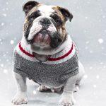 Les chiens ont-ils froid ?