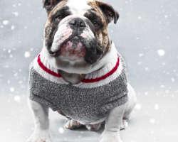 Protéger mon chien du froid : quelques précautions