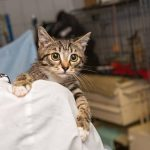 8 Signes qui montrent qu'un chat est malade