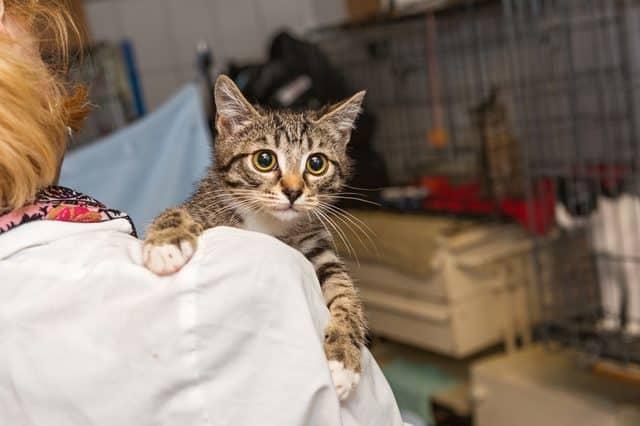 Quand emmener son chat chez le vétérinaire ? Quels signes doivent m'alerter d'un problème de santé ?