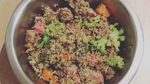 Recette maison pour chien : boeuf / quinoa / légumes