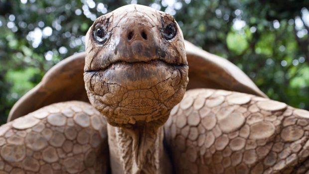 Hibernation de la tortue : les étapes d'hibernation