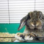 Cage pour lapin : comment la choisir ?
