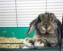Bien choisir la cage du lapin pour son habitat