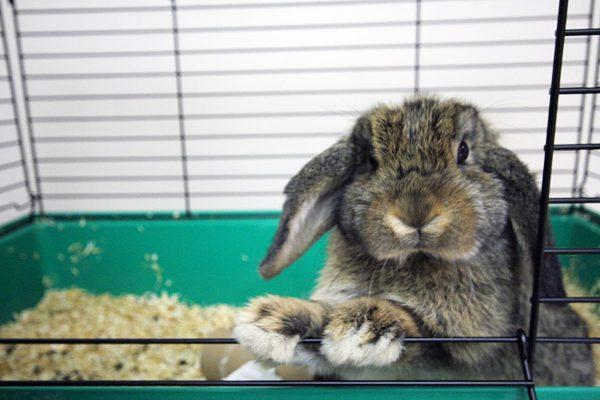 Quelle cage choisir pour votre lapin ?