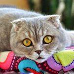 Je suis allergique aux poils de chats, que faire ?