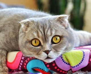 Allergie aux poils de chats : infos conseils et traitement