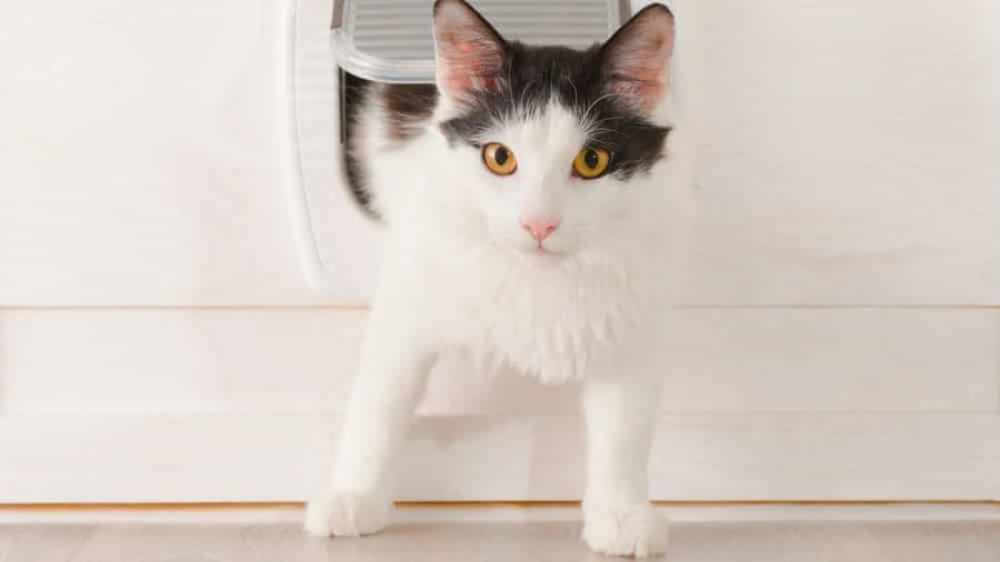 Chatière : apprendre à ton chat à l'utiliser