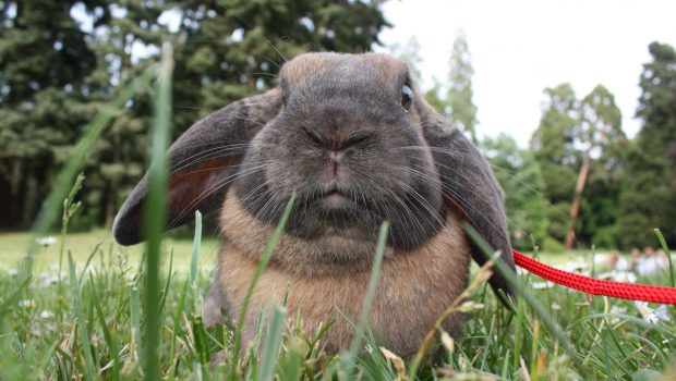 Nettoyer la cage de votre lapin : fréquence et litière