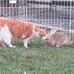 Lapin : le faire cohabiter avec d'autres animaux