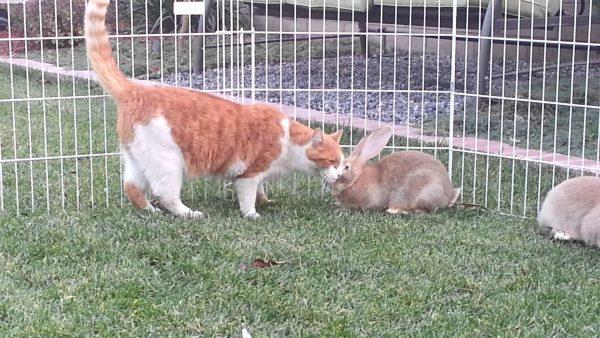 Cohabitation du lapin avec d'autres animaux