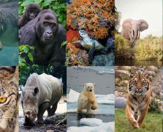 10 animaux en voie d'extinction