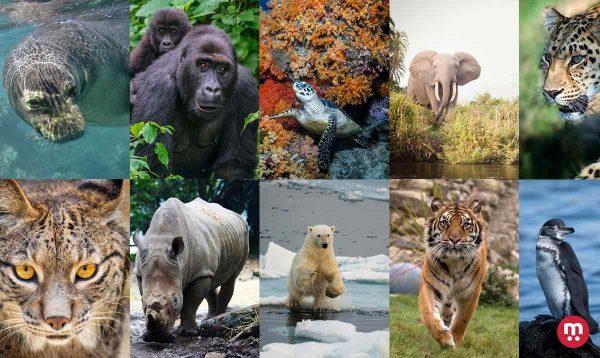 10 animaux qui sont menacés et en voie de disparition
