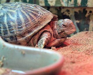 Terrarium pour tortue : le choisir et l'entretenir