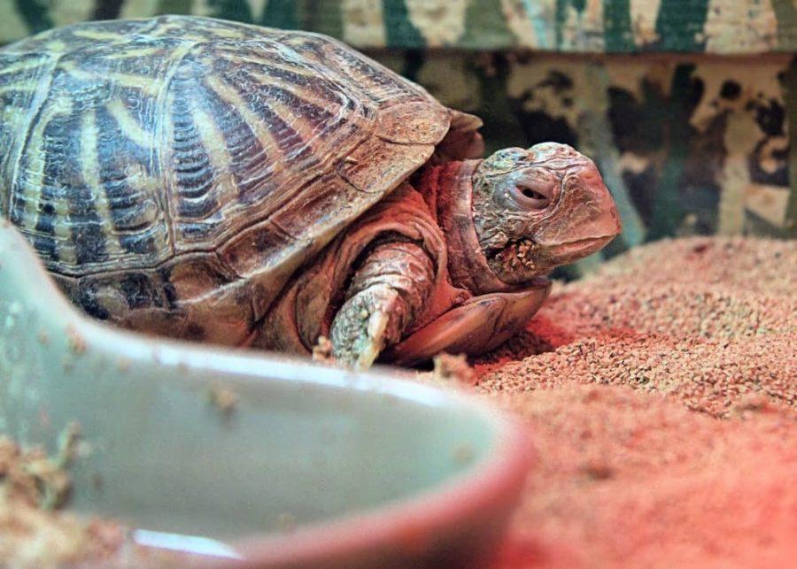Mettre sa tortue dans un terrarium ?