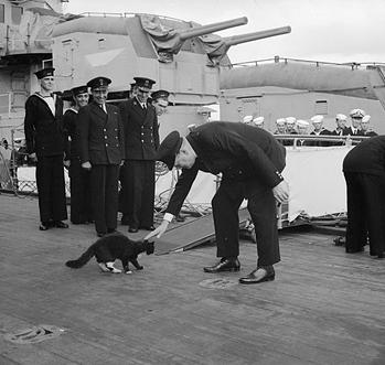 churchill chat noir nelson