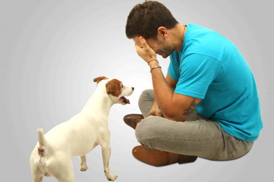 Mon chien ne veut pas rester seul que faire - Mon ado ne veut rien faire ...