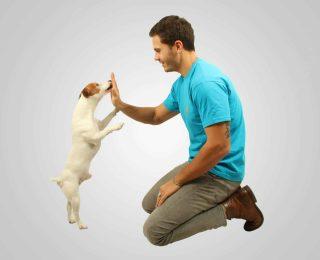 Pourquoi éduquer son chien ?