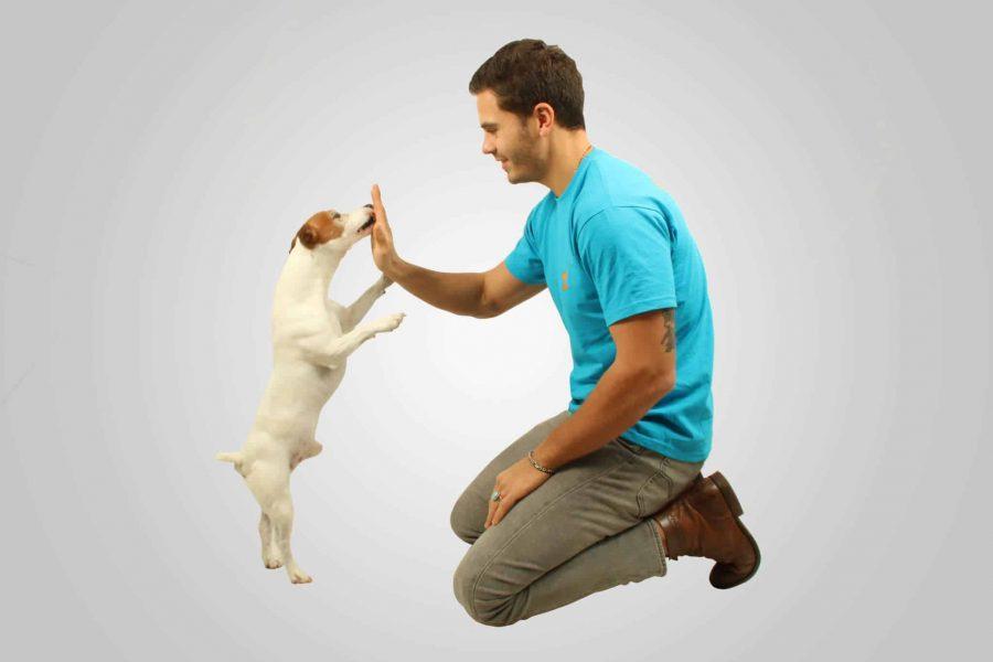 Pourquoi éduquer ton chien ?