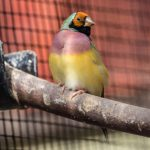 Perchoirs et mangeoirs pour oiseaux exotiques