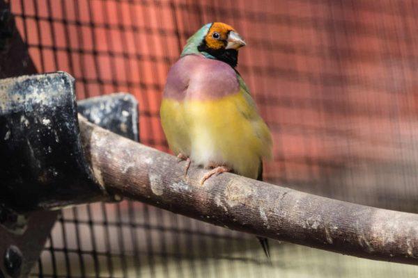Comment choisir les perchoirs et mangeoires pour oiseaux exotiques