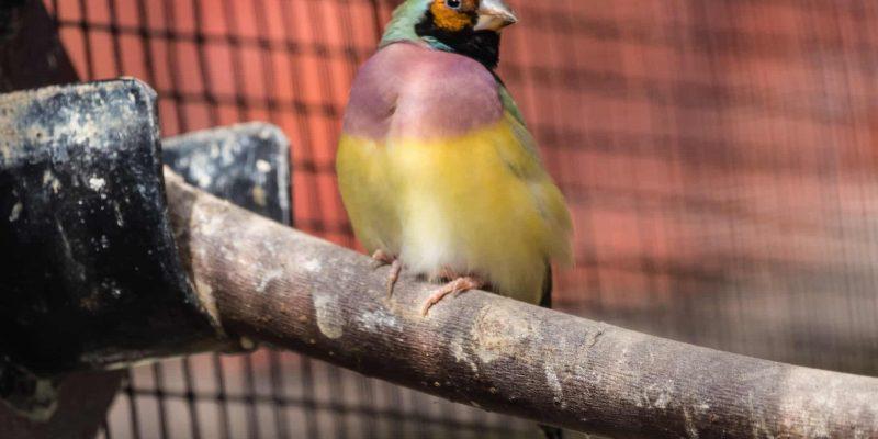 Perchoirs et mangeoires pour oiseaux exotiques