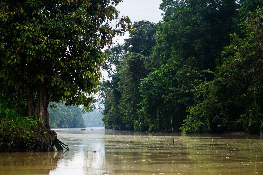 Rivière Kinabatangan, Sabah, Bornéo.