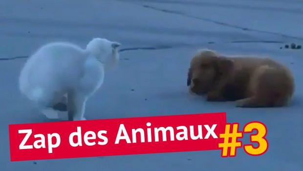 Le Zapping autour des animaux #3