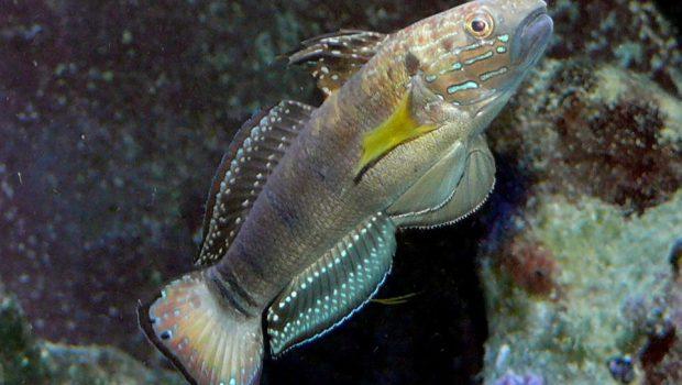 Les poissons nettoyeurs : tout savoir sur ces mangeurs d'algues