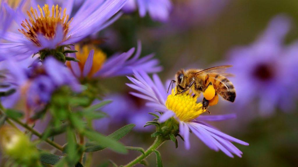 abeille extrait nectar