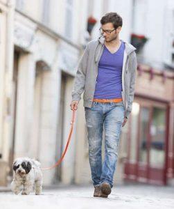 chien et maître en ville
