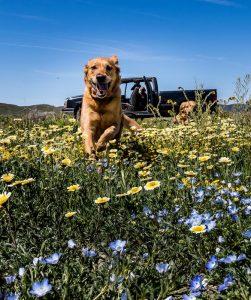 chien en pleine nature