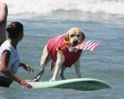 15 activités à faire avec son chien