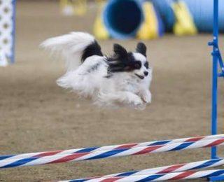 Pratiquer l'agility avec son chien